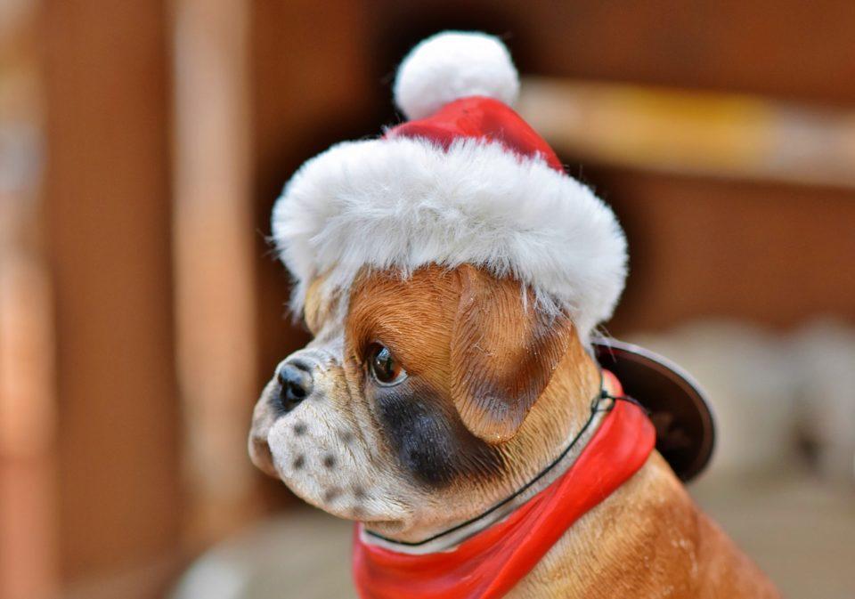 Frohe Weihnachten Hsv.Frohe Weihnachten Hundesportverein Mainz Laubenheim De